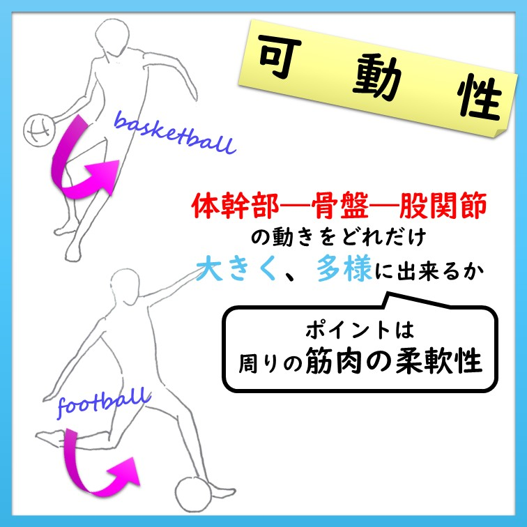 体幹部―骨盤―股関節の可動性