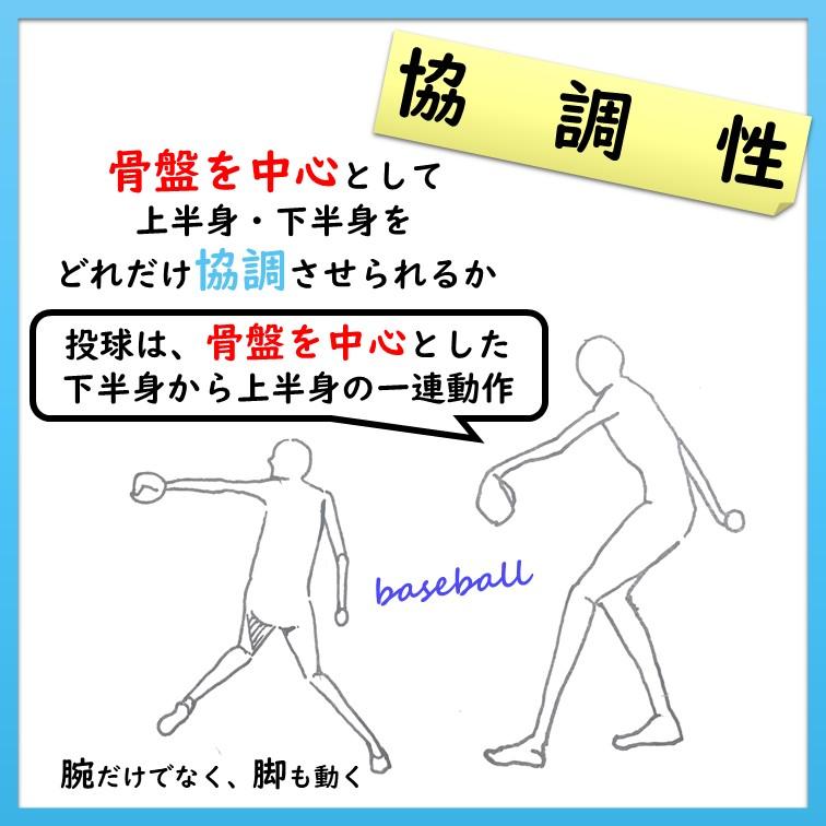 体幹部―骨盤―股関節の協調性