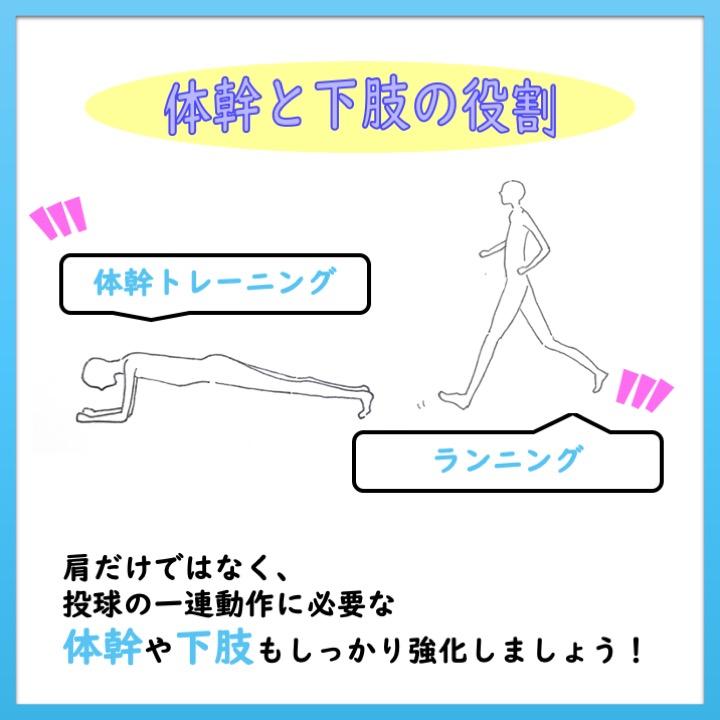 体幹と下肢の役割