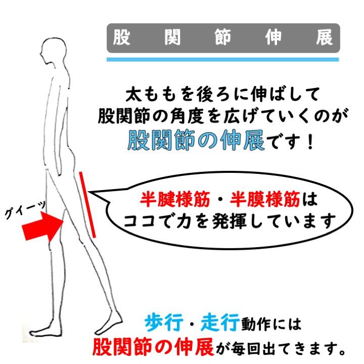 股関節伸展