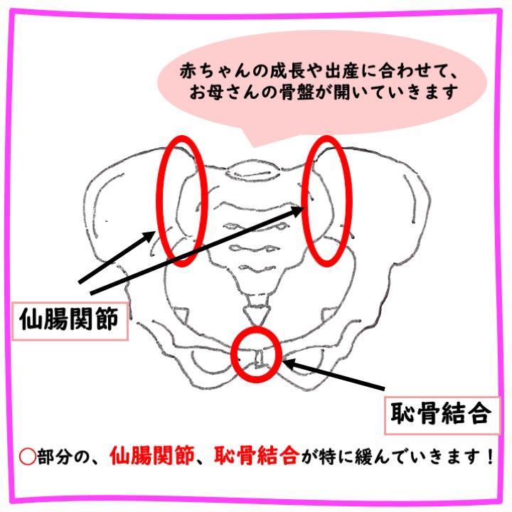 妊娠による骨盤の開き