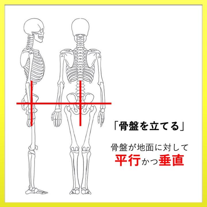 骨盤の正しい位置