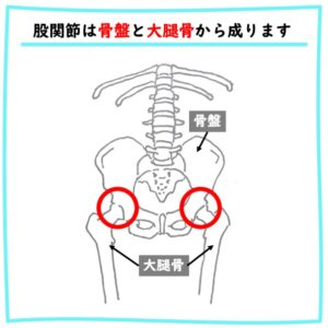 股関節を構成する骨