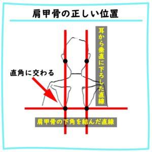 肩甲骨の正しい位置